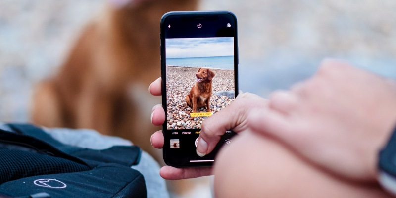 Person taking a picture of a dog with mobile phone